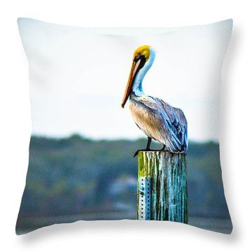Throw Pillow featuring the photograph Posing Pelican by Shannon Harrington