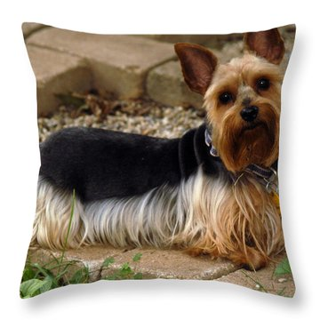 Throw Pillow featuring the photograph Posing by Wanda Brandon