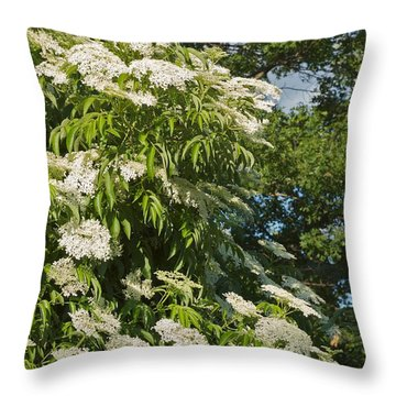 Throw Pillow featuring the photograph Potchen's Cascade by Joseph Yarbrough
