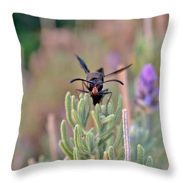 Throw Pillow featuring the photograph Potter Wasp by Werner Lehmann