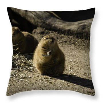 Prairie Dog Sees The Shadow Throw Pillow