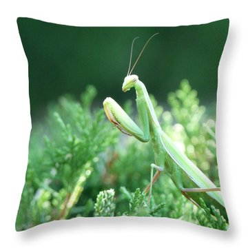 Praying Beauty Throw Pillow