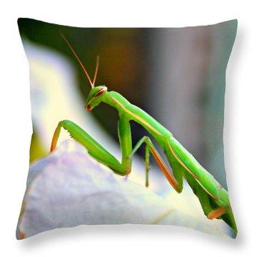 Praying Mantis Throw Pillow by Jo Sheehan