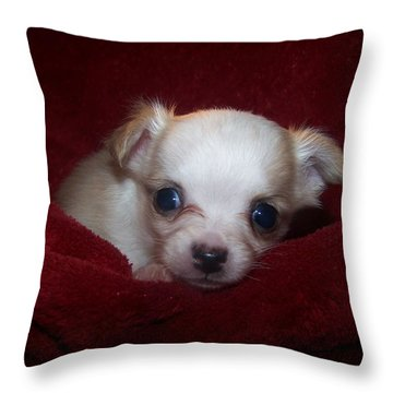 Precious Throw Pillow by Christy Leigh