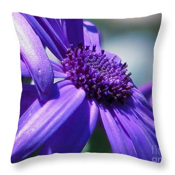 Pretty In Pericallis Throw Pillow by Rory Sagner