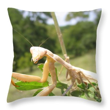 Throw Pillow featuring the photograph Preying Mantis by Mark Robbins