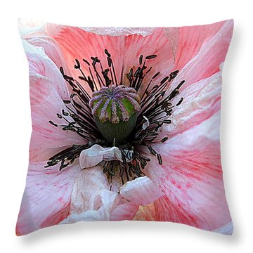 Prime Time Throw Pillow by Shirley Sirois