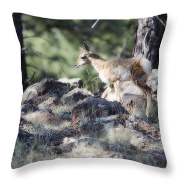 Pronghorn Antelope Fawn Throw Pillow