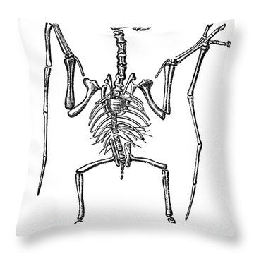 Pterodactylus, Extinct Flying Reptile Throw Pillow by Science Source