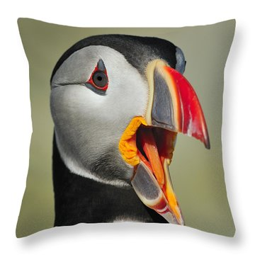 Puffin Portrait Throw Pillow by Tony Beck