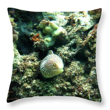 Puhi II Throw Pillow by Suzette Kallen