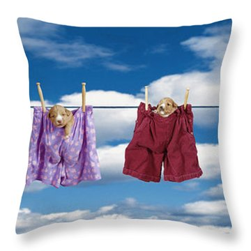 Puppies Hanging Out Throw Pillow by Darwin Wiggett