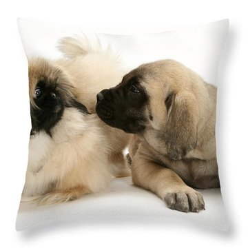 Puppies Throw Pillow by Jane Burton
