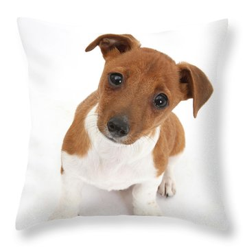 Puppy Looking Up Throw Pillow by Mark Taylor