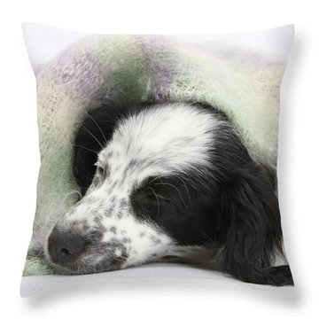 Puppy Sleeping Under Scarf Throw Pillow by Mark Taylor