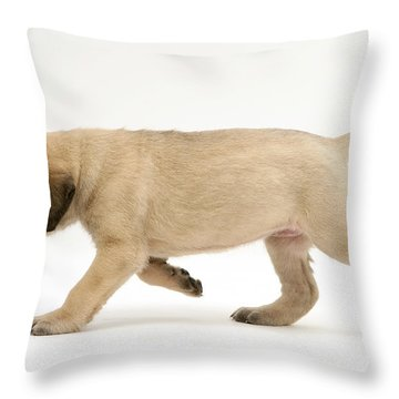 Puppy Trotting Throw Pillow by Jane Burton