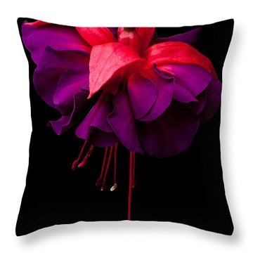 Purple And Pink Beauty Throw Pillow by Dawn OConnor
