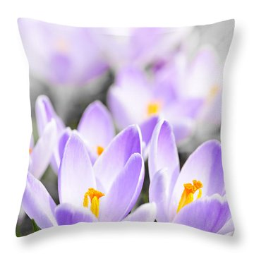 Purple Crocus Blossoms Throw Pillow by Elena Elisseeva