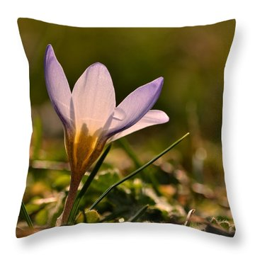 Purple Crocus Throw Pillow