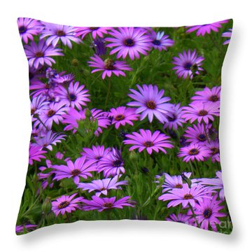 Purple Daisies Square Throw Pillow by Carol Groenen