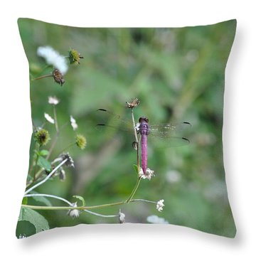Purple Dragon Fly Throw Pillow