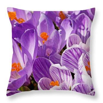 Purple Oh Purple Throw Pillow