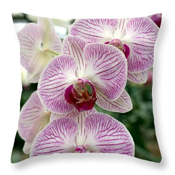 Throw Pillow featuring the photograph Purple Orchids by Debbie Hart