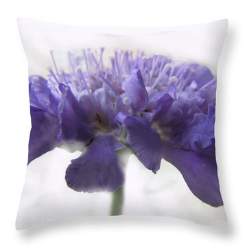 Throw Pillow featuring the photograph Purple Pincushin by Debbie Portwood