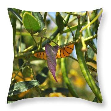 Purple Pink Green Chrysalis  Throw Pillow