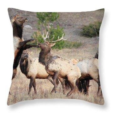 Put Up Your Dukes Throw Pillow