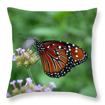 Throw Pillow featuring the photograph Queen Butterfly by Eva Kaufman