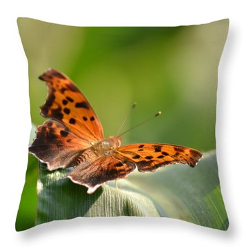 Throw Pillow featuring the photograph Question Mark Butterfly by JD Grimes