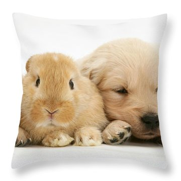 Rabbit And Puppies Throw Pillow by Jane Burton