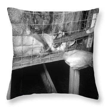 Rabid Fox, 1958 Throw Pillow by Science Source
