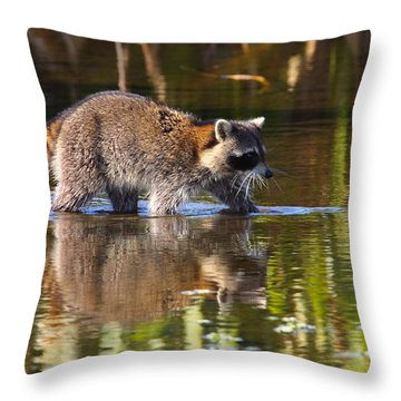 Raccoon Foraging  Throw Pillow by Bruce J Robinson