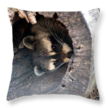 Throw Pillow featuring the photograph Raccoon In Hiding by Kathy  White