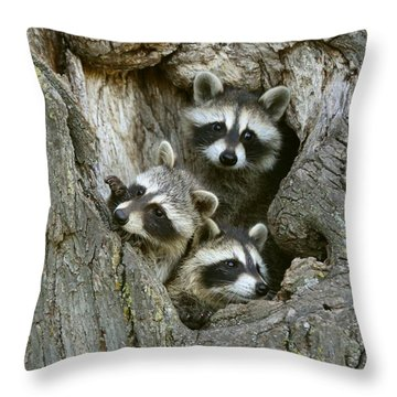 Raccoons Peeking Out Throw Pillow by Myrna Bradshaw