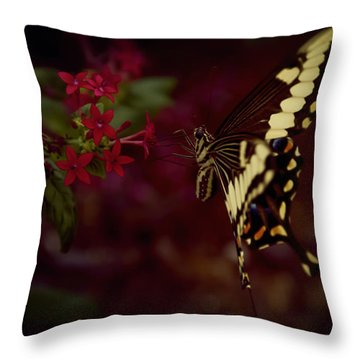 Radiant Swallowtail Throw Pillow