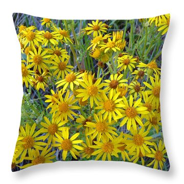 Ragwort - Tansy Throw Pillow by Pamela Patch
