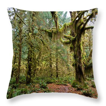 Rain Forest In Fall Throw Pillow