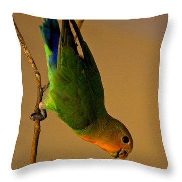 Rainbow Bird Throw Pillow by Syed Aqueel