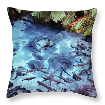Throw Pillow featuring the photograph Rainbow Springs by Mark Dodd
