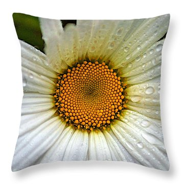 Raindrops On A Daisy Throw Pillow