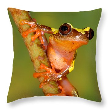 Ranita De Sarayacu  Throw Pillow by F Tomasinelli and E Biggi and Photo Researchers