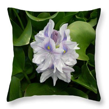 Rare Hawain Water Lilly Throw Pillow by Claude McCoy