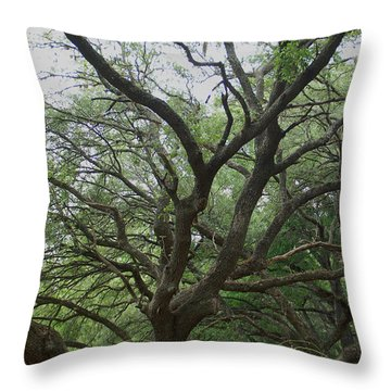 Reaching Out Throw Pillow by Aimee L Maher Photography and Art Visit ALMGallerydotcom