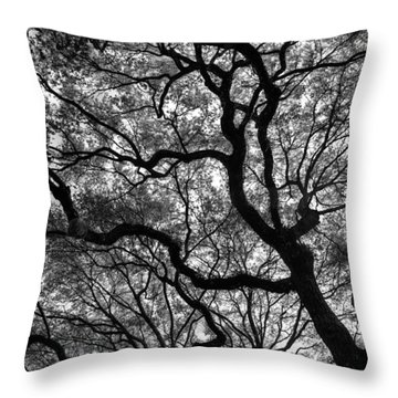 Reaching To The Heavens Throw Pillow by Andrew Crispi