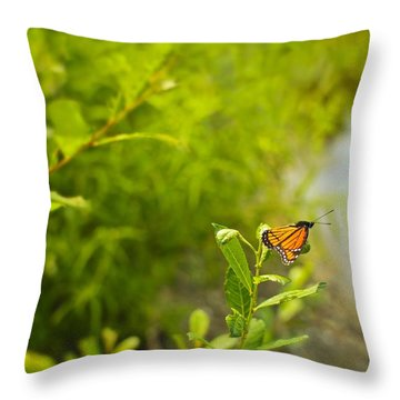 Ready Set Go Viceroy Butterfly Throw Pillow by Marianne Campolongo