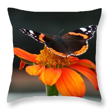 Red Admiral Throw Pillow by Nicola Butt