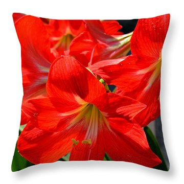 Red Amaryllis Flowers Throw Pillow